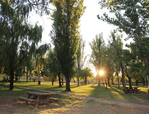casadomarco-trees